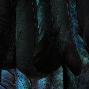 Dark feathers with a shade of green